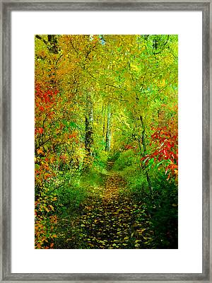 An Autumn Path Framed Print by Jeff Swan