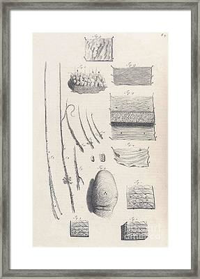 Anatomia Humani Corporis, Table 04, 1690 Framed Print by Science Source