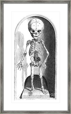 Anatomia Humani Corporis, Table 101 Framed Print by Science Source