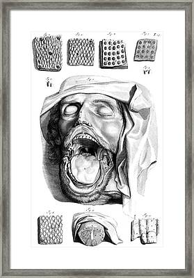 Anatomia Humani Corporis, Table 13, 1690 Framed Print by Science Source