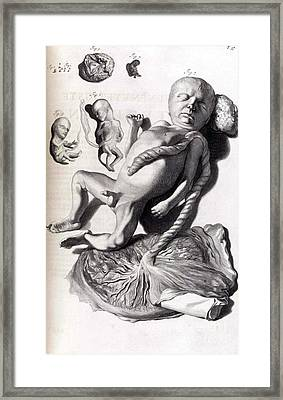 Anatomia Humani Corporis, Table 57, 1690 Framed Print by Science Source