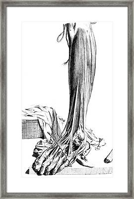 Anatomia Humani Corporis, Table 81, 1690 Framed Print by Science Source