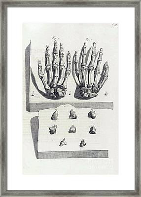 Anatomia Humani Corporis, Table 97, 1690 Framed Print by Science Source