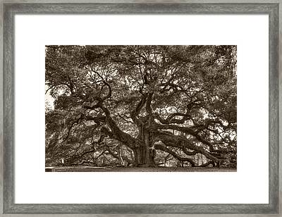 Angel Oak Live Oak Tree Framed Print