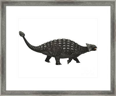 Ankylosaurus On White Framed Print