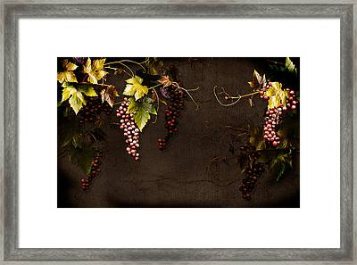 Antique Grapes Framed Print by Marsha Tudor