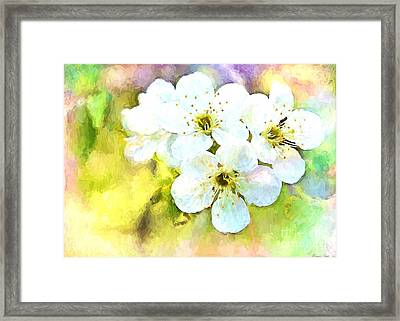 Apple Blossom Painted Effect Framed Print by Debbie Portwood