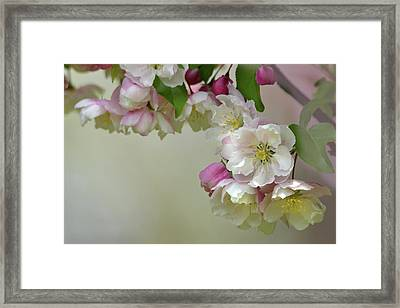 Framed Print featuring the photograph Apple Blossoms  by Ann Bridges