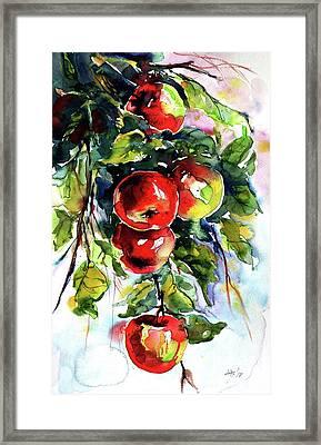 Apples Framed Print by Kovacs Anna Brigitta