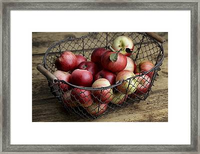 Apples Framed Print by Nailia Schwarz