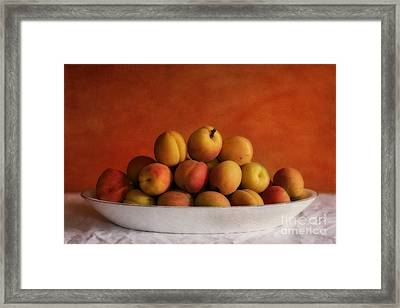 Apricot Delight Framed Print