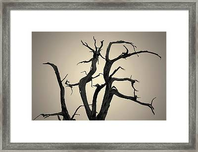 Framed Print featuring the photograph Arches Np Xix Toned by David Gordon