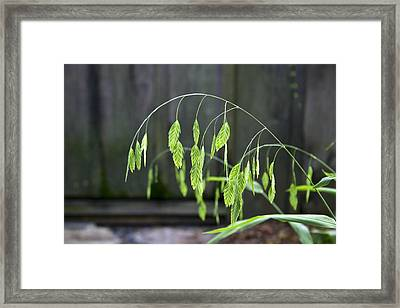 Arching Grass Framed Print by Frank Russell