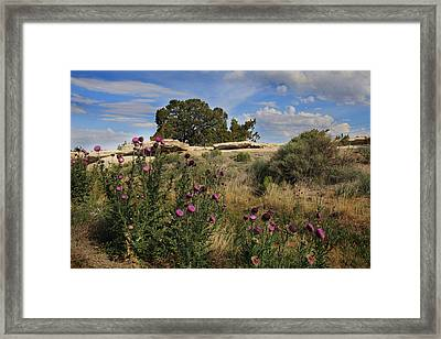 Framed Print featuring the photograph Arizona Desert by Joseph G Holland