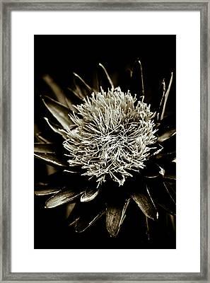 Artichoke Flower Framed Print by Frank Tschakert
