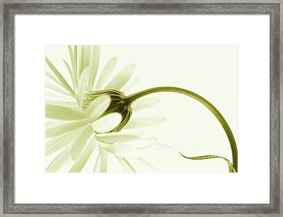 Artless Framed Print by Priska Wettstein