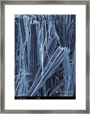 Asbestos, Sem Framed Print by Ted Kinsman