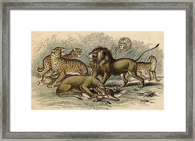 1. Asiatic Lion. 2. Lioness. 3.bengal Framed Print