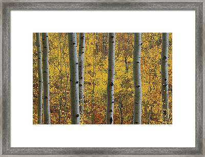 Framed Print featuring the photograph Aspen In Autumn At Mcclure Pass by Jetson Nguyen