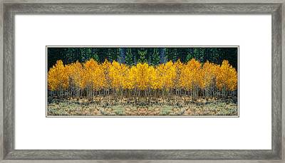Framed Print featuring the photograph Aspen Stand by Sherri Meyer