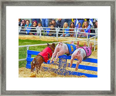 Framed Print featuring the photograph At The Pig Races by AJ Schibig