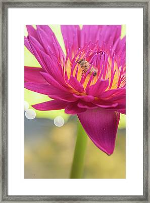 Attraction. Framed Print
