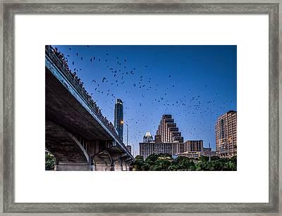 Austin Bat Watch Framed Print by Tod and Cynthia Grubbs