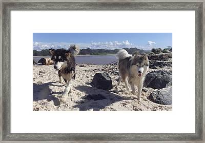 Australia - Two Huskies On The Beach Framed Print
