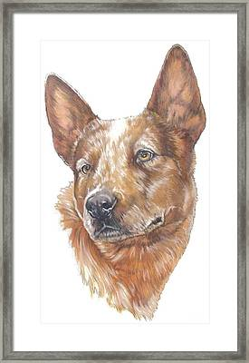 Australian Cattle Dog Framed Print by Barbara Keith