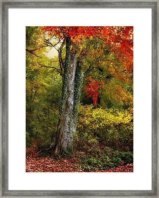 Autumn Ablaze Framed Print by Jessica Jenney