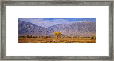 Autumn Color Along Highway 395, Sierra Framed Print by Panoramic Images