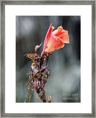 Autumn Flower  Framed Print by Jason Christopher