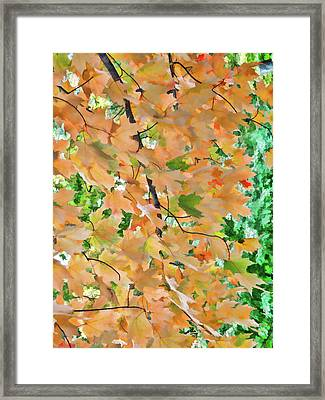 Autumn Foliage 3 Framed Print