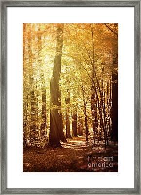 Autumn Forest Framed Print by Mythja Photography