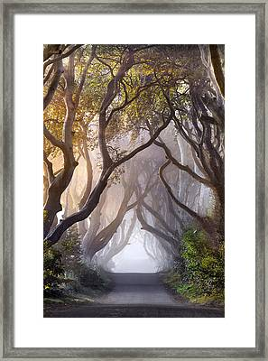 Autumn Hedges Framed Print by Stephen Emerson
