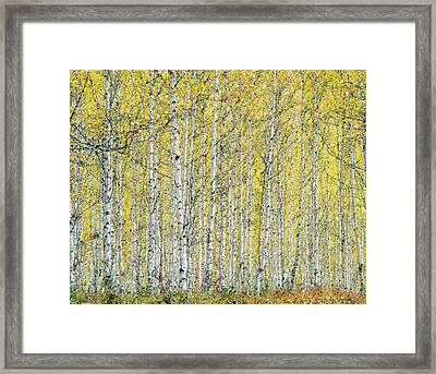 Framed Print featuring the photograph Autumn Landscape by Vladimir Kholostykh