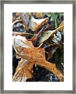 Autumn Leaf Abstract Framed Print