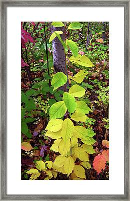 Autumn Leaves II Framed Print