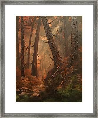 Autumn On Cannock Chase Framed Print