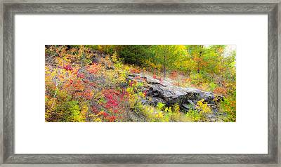 Autumn Palette Framed Print