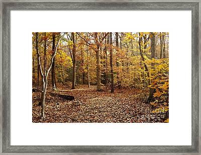 Autumn Scenery 2 Framed Print by Hideaki Sakurai