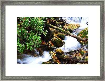 Autumn Serenity Framed Print by Thomas R Fletcher