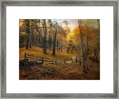 Autumn Trail Framed Print by Jessica Jenney