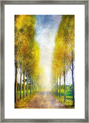 Autumn Trees Framed Print by Svetlana Sewell