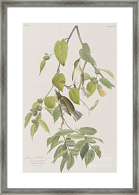 Autumnal Warbler Framed Print by John James Audubon