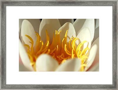 Awakening Framed Print by Nataliya Dmitrieva