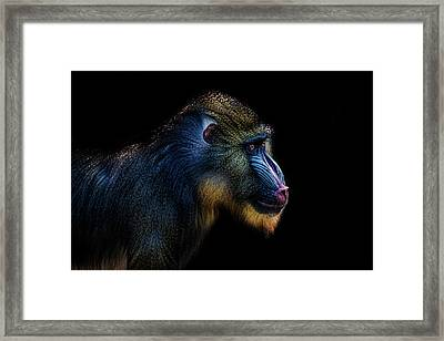Baboon Framed Print by Martin Newman