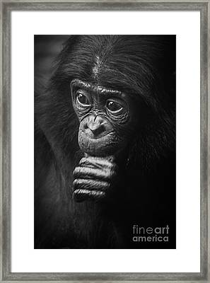 Framed Print featuring the photograph Baby Bonobo Portrait by Helga Koehrer-Wagner