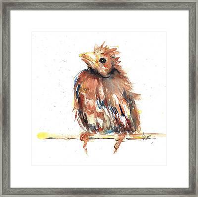 Baby Cardinal - New Beginnings Framed Print