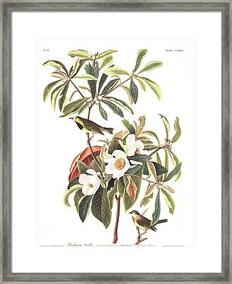 Bachman's Warbler  Framed Print by John James Audubon